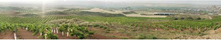 tradicional wines